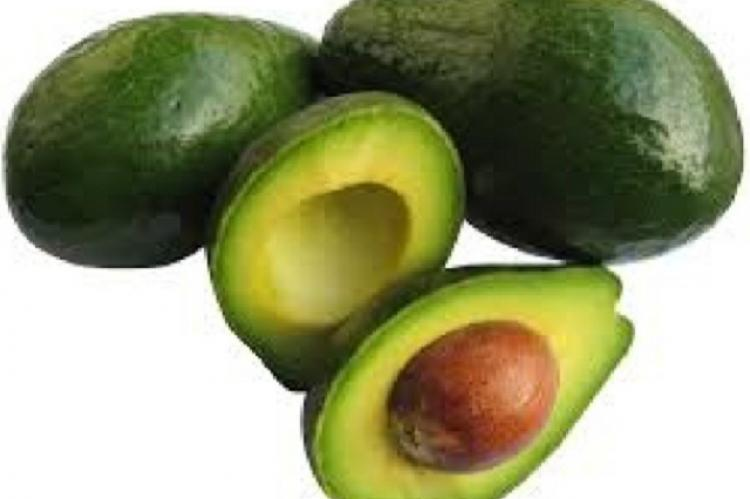 Persea americana (Avocado) fruit and seed